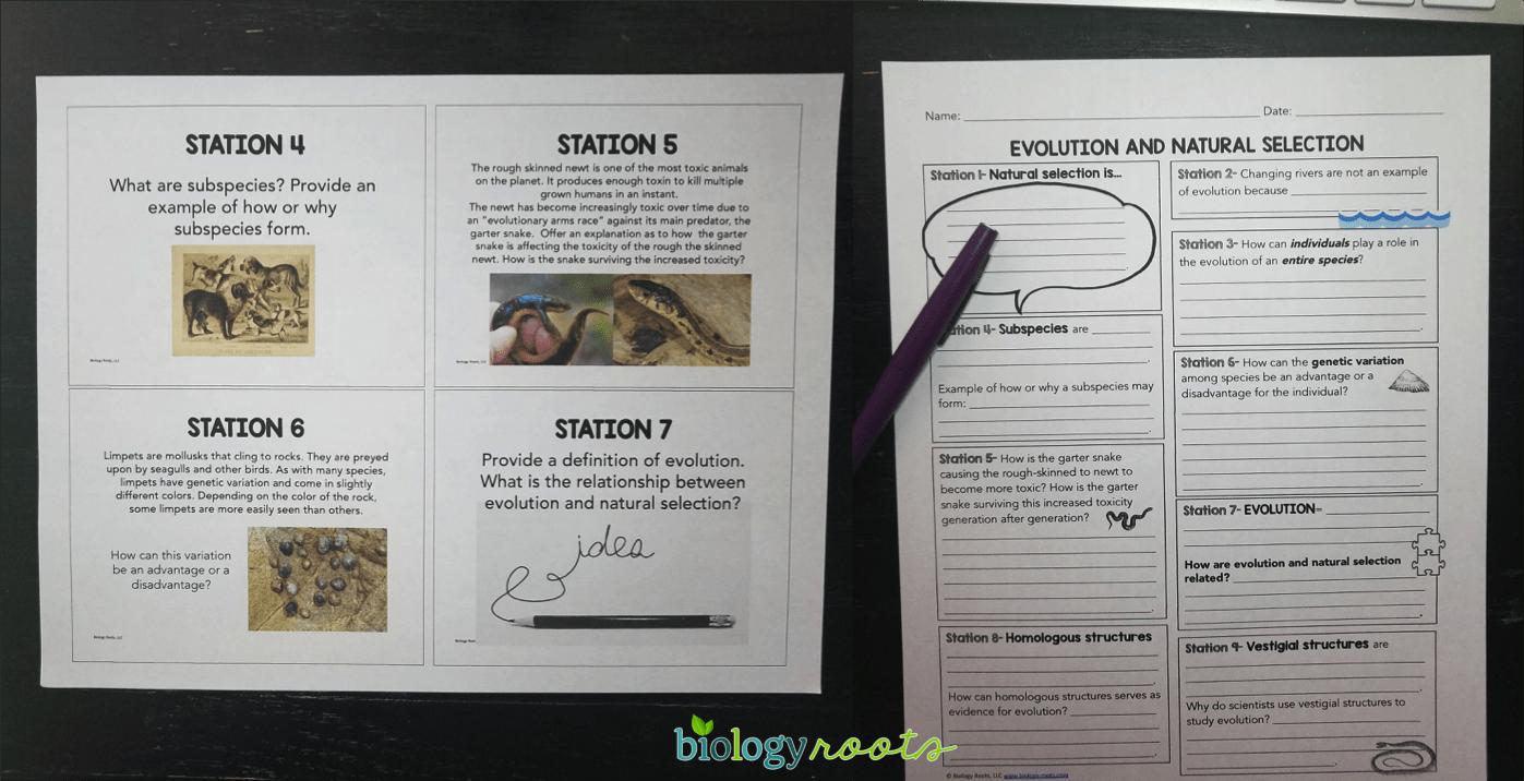 evolution task cards