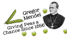 Mendel Give Peas a chance