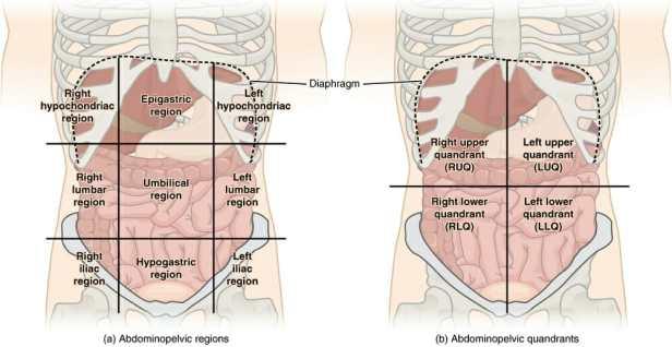 Regiones del cuadrante abdominal