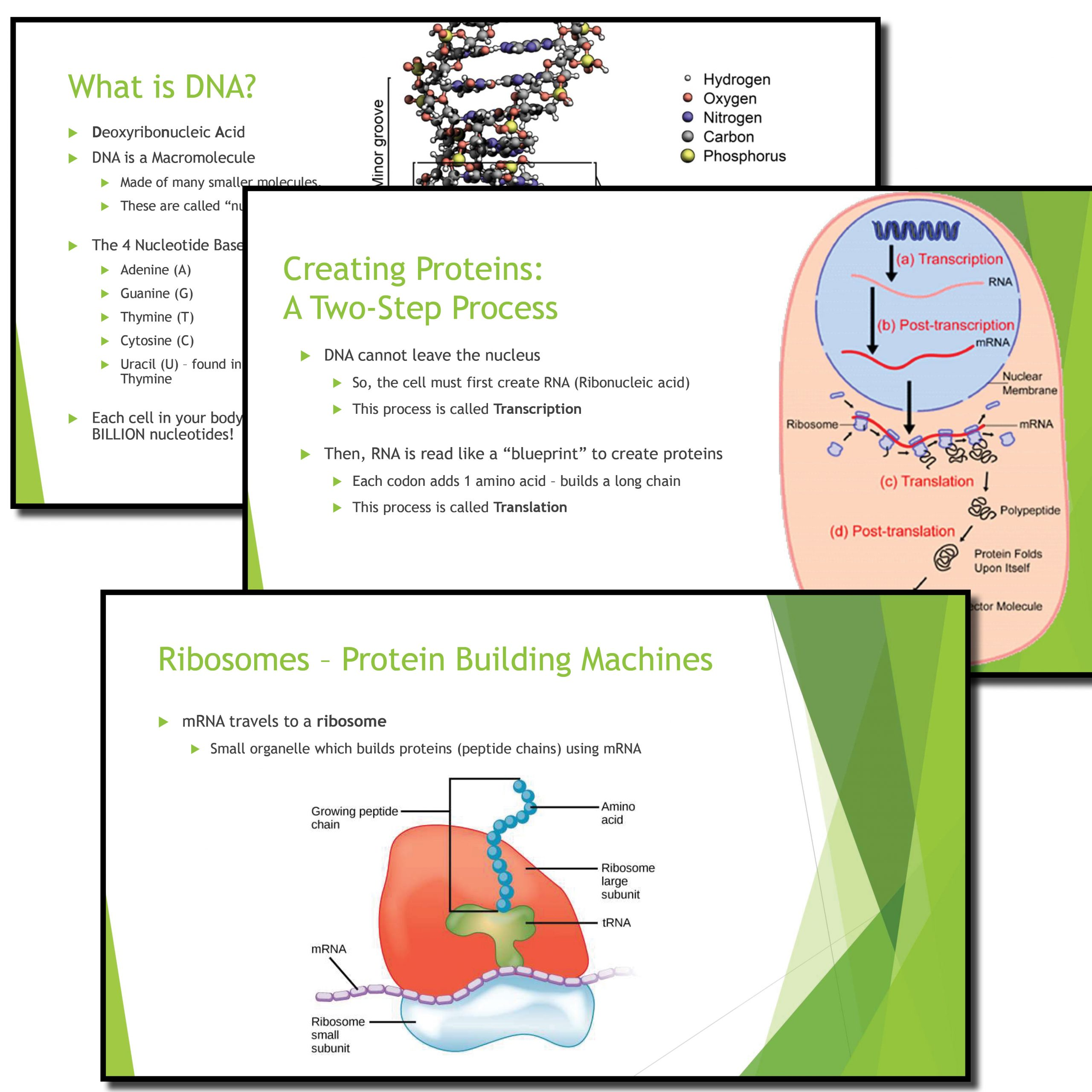 From Dna To Proteins Complete Bundle
