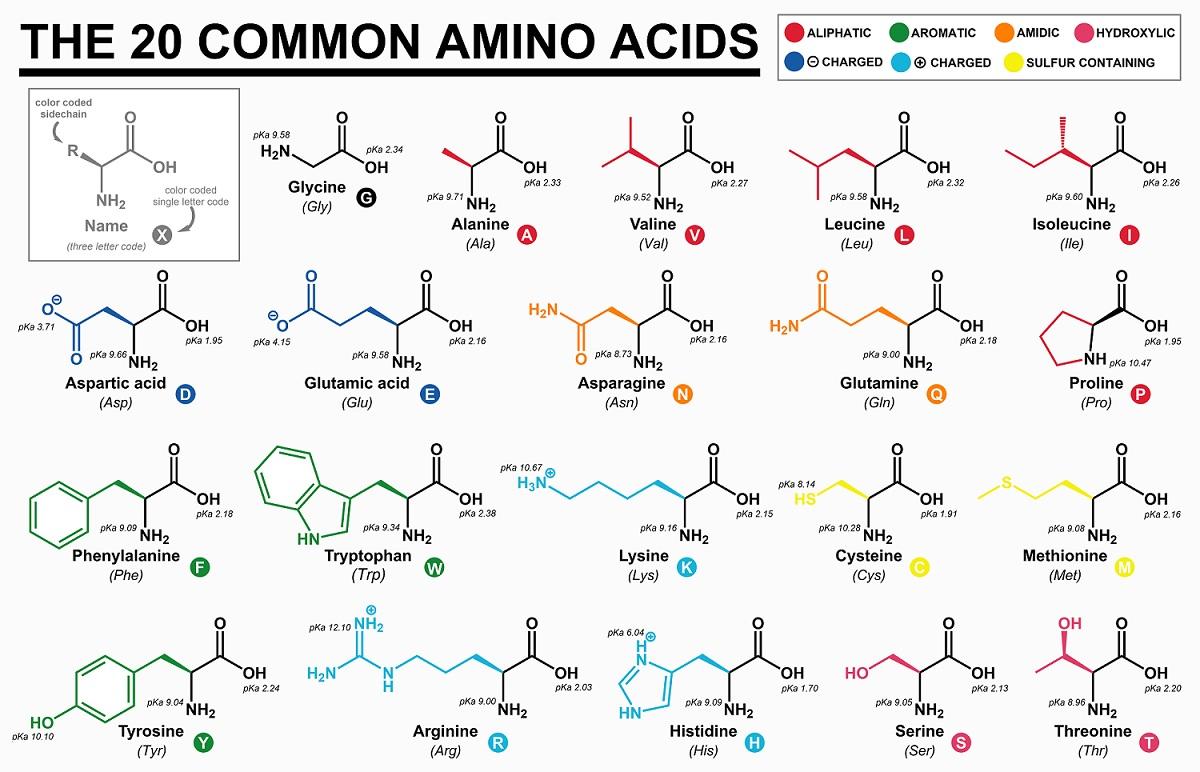 Ls1 6 Sugar To Carbon Molecules