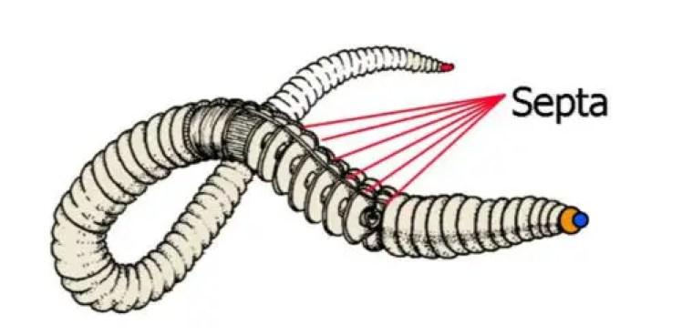 image of metamerism