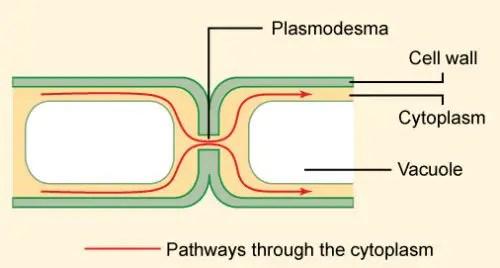 image of plasmadesma