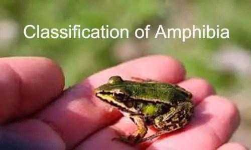 image of Amphibia