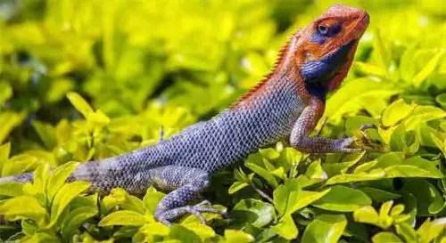 image of reptiles