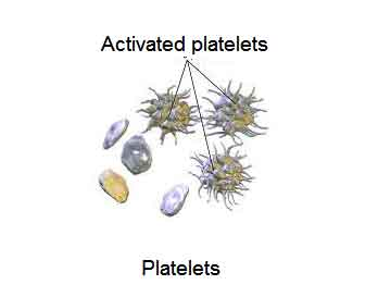 image of Platelets