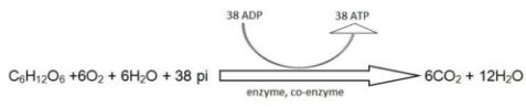 image of Equation of Respiration