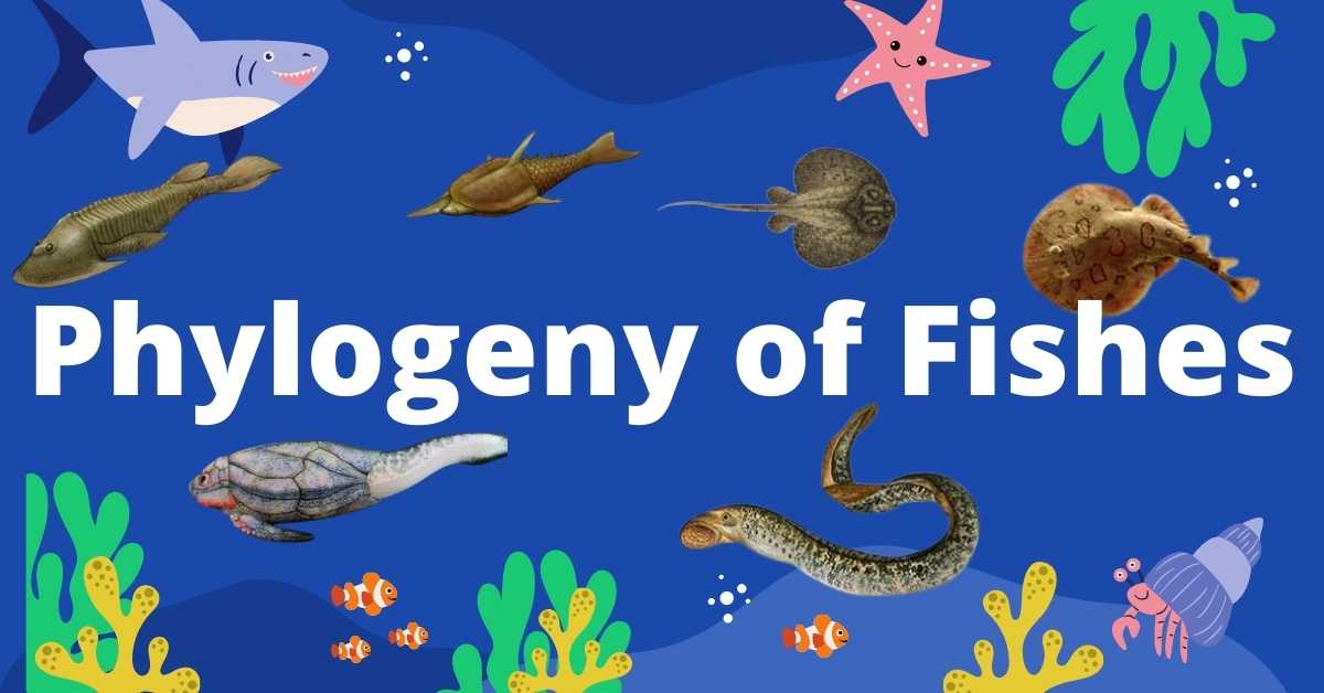 image of Phylogeny of fish