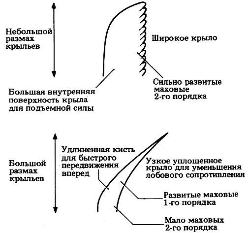 pierderea în greutate bat aripi)
