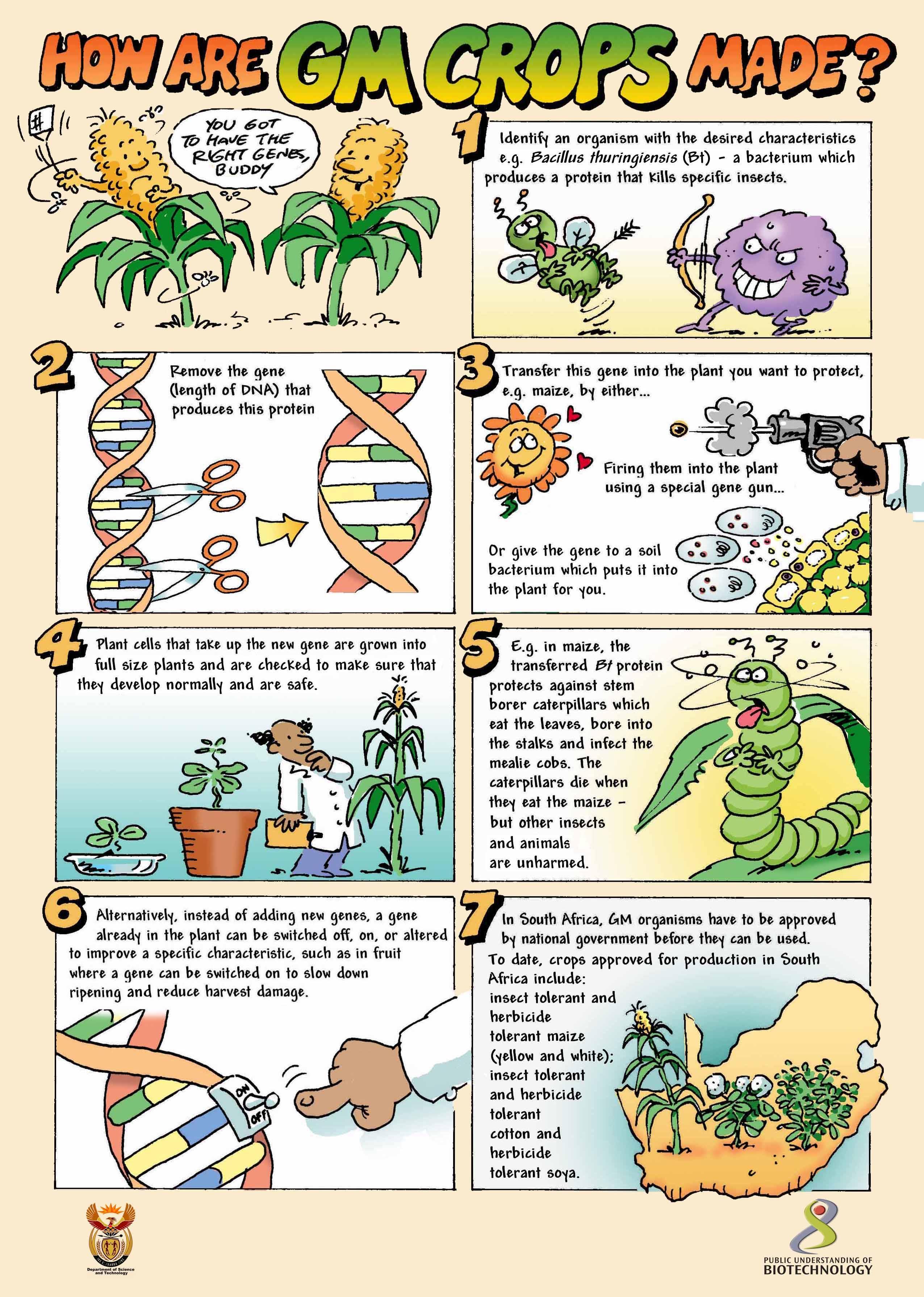 Method Of Growing Genetically Modified Food