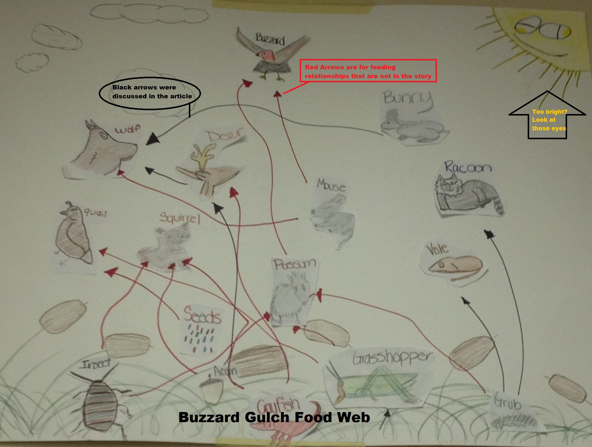 Food Web Activity