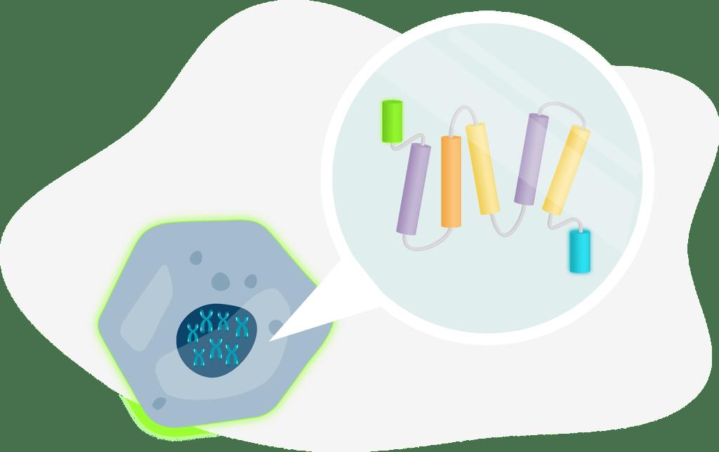 Illustration of engineered protein