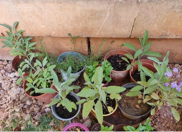 herb plant pots