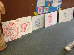 Student drawings of the heart