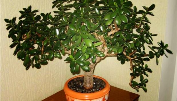 6 biljaka
