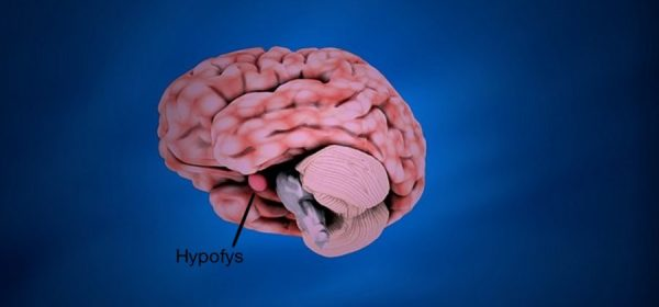 Hypofysinsufficiens