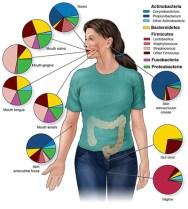Microbiome Regions