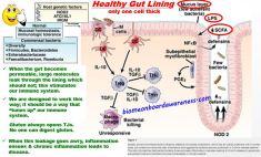 Healthy Gut Lining