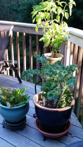 Our greens deck garden