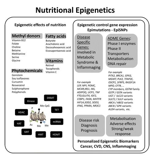 Epigenetic Effects of Nutrition