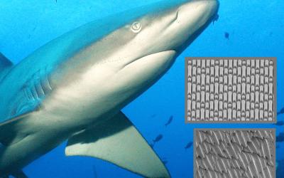 Innovación Tecnológica en Materiales observando las superficies en la naturaleza. El caso de Sharklet Technologies y la piel de tiburón