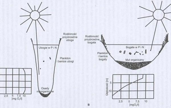 Porównanie jezior oligotroficznych (A) i eutroficznych (B)