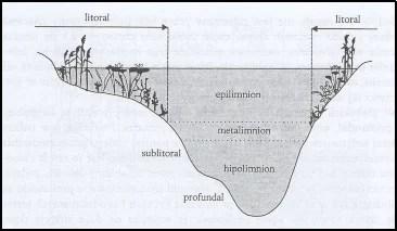 Strefy jeziora i uwarstwienie mas wody