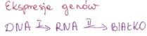 ekspresja genow