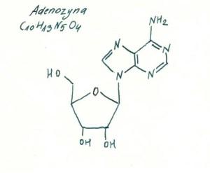 Adenozyna, rys. Antonina Żmuda