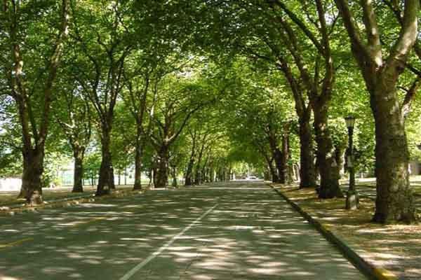 Αστικό πράσινο