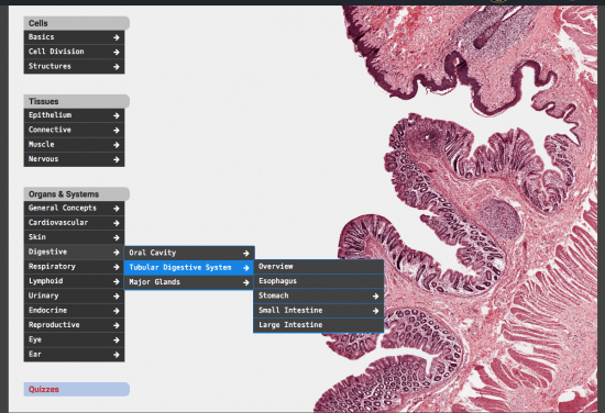 Expanded menu for the histology page.