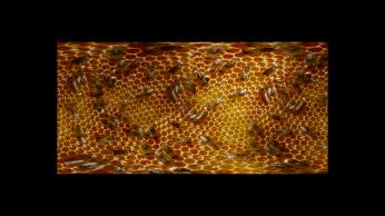 a05-honey