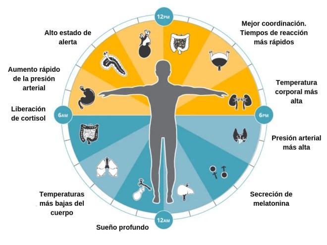 Cronobiología - Bionutrición Ortomolecular