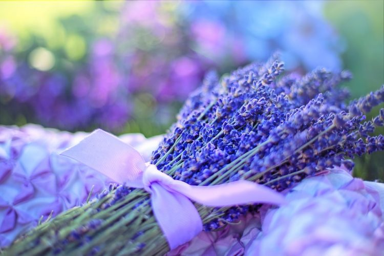 Lavender: Benefits and General Uses