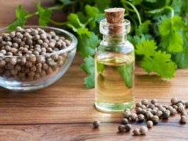The Difference Between Coriander and Cilantro Essential Oils
