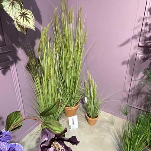 Showroom bioplant