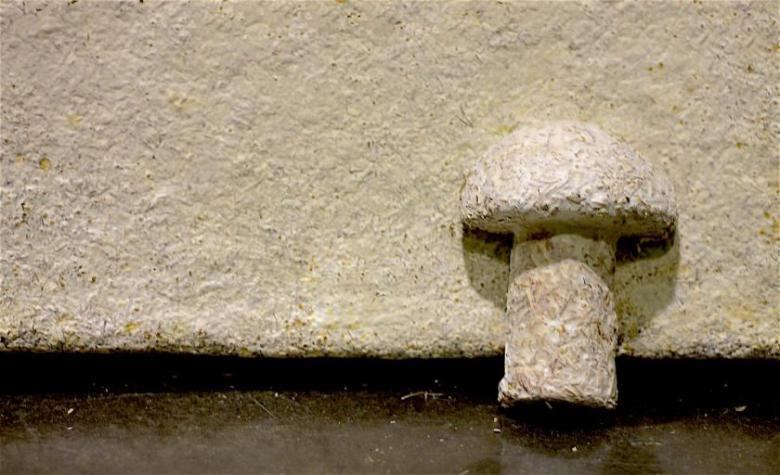 UN biobased materials mycofoam