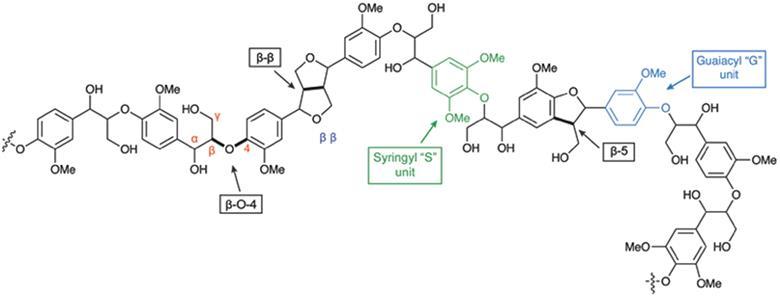 lignin bioaromatics