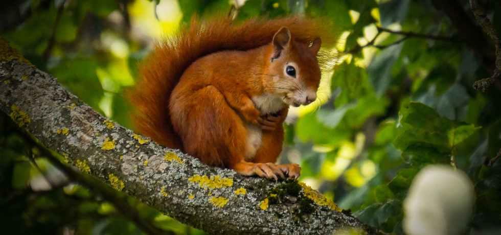 bioplastics care parts squirrels