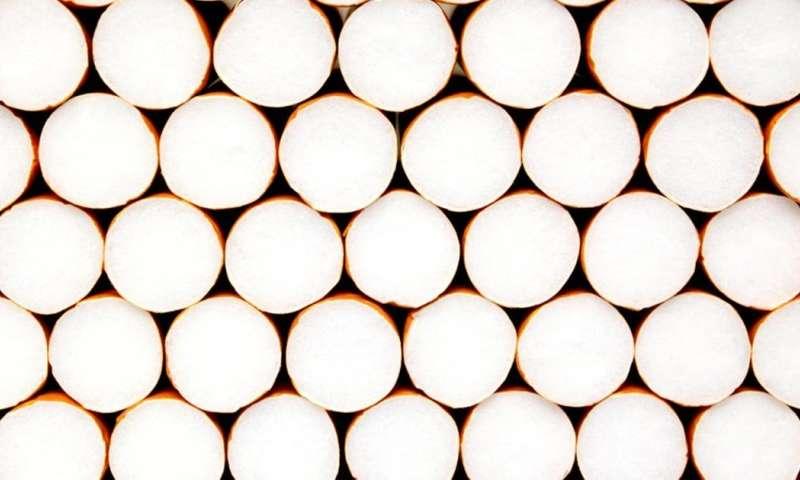biodegadable cigarette filters