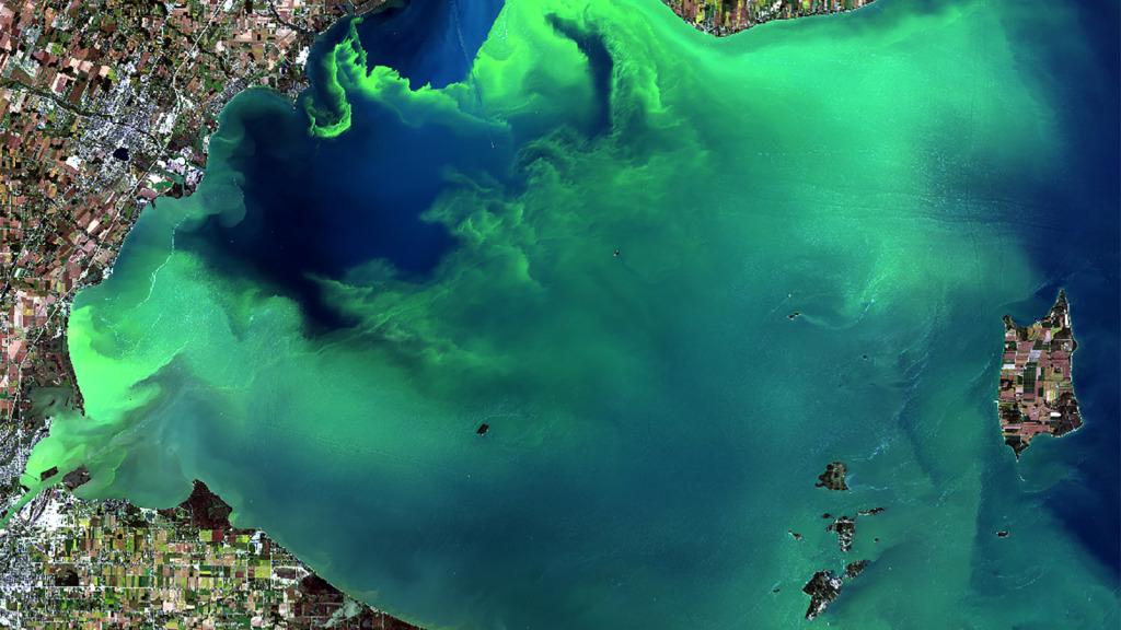 convert algae bloom in bioplastics