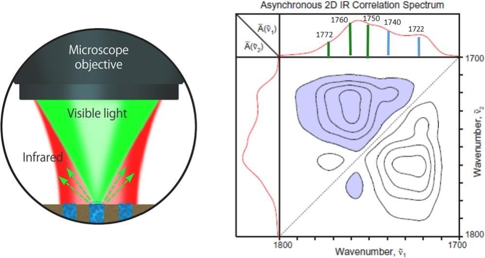 spectral imaging bioplastics