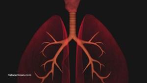 Женшен-бели-дробове