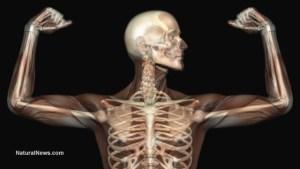 Анатомия-Човешки-Скелет-Рентген