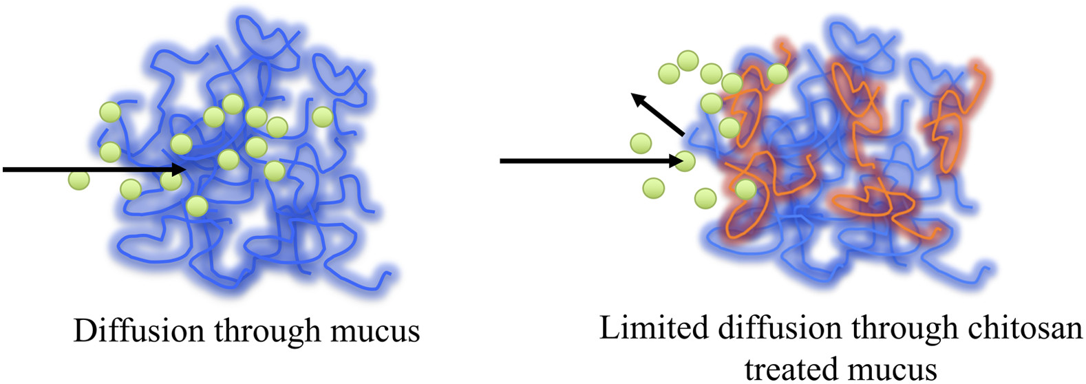 Reinforcing Mucus Barrier Properties with Low Molar Mass
