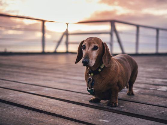 OLD DOG marcus-wallis-471436-unsplash