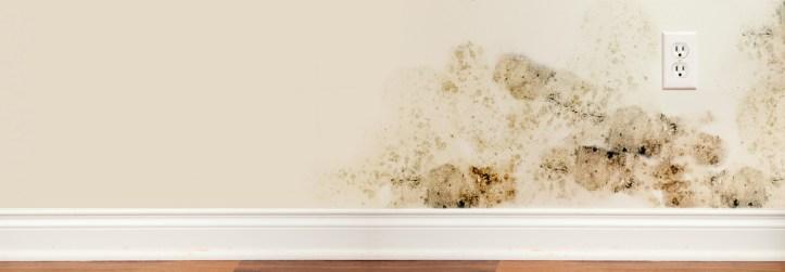 1-37-enlever-les-taches-de-moisissures-sur-les-murs