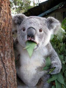 nettoyant-a-leucalyptus
