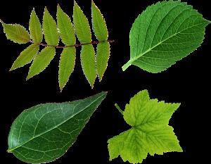 plantes-depolluantes-feuilles-arbres