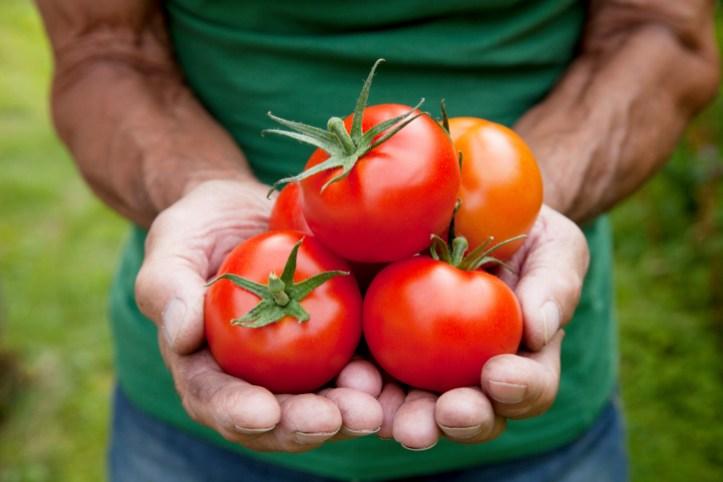 1.922 Enlever une tache de tomate sur des vêtements (3).jpg